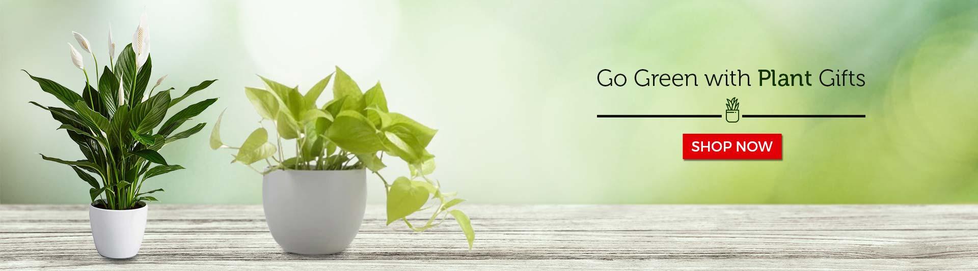 Buy Plants Online in India